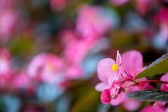 Blommor blommar i trädgården med suddig effekt för lins som förgrund och bakgrund royaltyfria foton