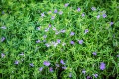 Blommor blommar i trädgården med suddig effekt för lins som förgrund och bakgrund arkivbild