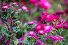 Blommor blommar i trädgården med suddig effekt för lins som förgrund och bakgrund royaltyfri bild