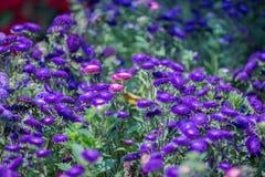 Blommor blommar i trädgården med suddig effekt för lins som förgrund och bakgrund royaltyfri fotografi