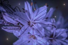Blommor blommorna med härliga färger, bakgrund arkivfoton