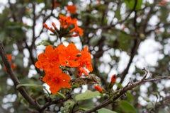 Blommor blomningträd på villan Vizcaya royaltyfri fotografi