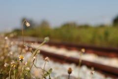 Blommor bredvid järnvägen Royaltyfri Bild