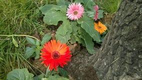 Blommor bredvid trädet Arkivfoto