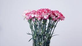 Blommor buketten, rotation, blom- sammansättning består av försiktigt ljus - rosa turkisk nejlika stock video