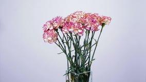 Blommor buketten, rotation på vit bakgrund, blom- sammansättning består av turkisk persikafärg för nejlika stock video
