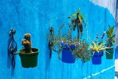 Blommor chefchaouen in Arkivbild