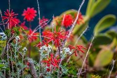 Blommor Cinque Terre, Italien Royaltyfria Bilder