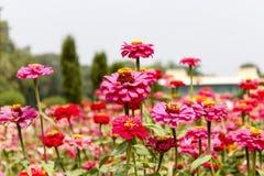 Blommor - closeup Arkivfoto