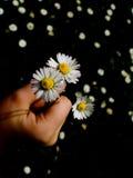 blommor dig Arkivfoto