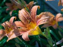 Blommor efter regnar Arkivfoton