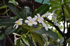 Blommor efter regnar royaltyfria bilder