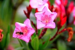 Blommor efter regnet Arkivbilder