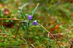Blommor fältet, ängen, tusenskönor, maskrosor, gräs, betar, ogräs royaltyfri bild