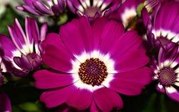 Blommor färger Royaltyfri Fotografi