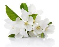 blommor för äppledjupfält blir grund treen Fotografering för Bildbyråer