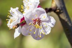 blommor för äppledjupfält blir grund treen Arkivfoto