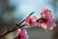 blommor för äppledjupfält blir grund treen Arkivbilder