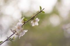 blommor för äppledjupfält blir grund treen arkivfoton