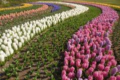 blommor för 1 kula Arkivfoton
