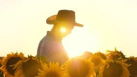 blommor för agronommanosamatrivaet och solrosfrö Affärsmannen med minnestavlan undersöker hans fält med solrosor lager videofilmer