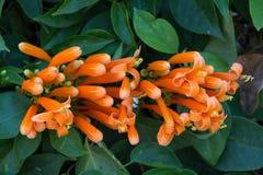 Blommor för bakgrund Royaltyfria Bilder
