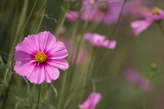 Blommor för bakgrund Arkivbilder