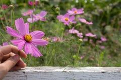 Blommor för bakgrund Fotografering för Bildbyråer