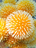 Blommor för bollShape guling Arkivbild