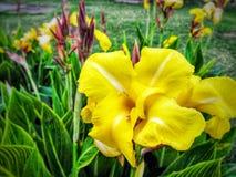 Blommor för det härligt arkivbilder