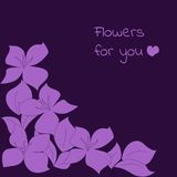 Blommor för dig Royaltyfria Foton