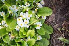 Blommor för din design Arkivfoto