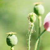 Blommor för din design Arkivfoton