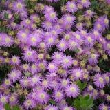 Blommor för din design Royaltyfria Bilder