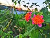 Blommor för djurliv för bygd` s Arkivbild