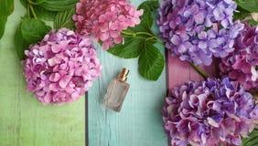 Blommor för doftflaska och vanlig hortensia Fotografering för Bildbyråer