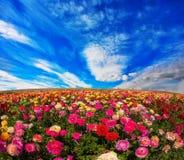 Blommor för export Fotografering för Bildbyråer