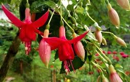 Blommor för härlig sommar för blomma soliga royaltyfri fotografi