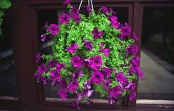 Blommor för hem- garnering Royaltyfri Bild