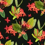 Blommor för Ixora bakgrund för botanik för modell för tropiska flowersIxora tropiska sömlös vektor illustrationer