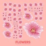Blommor för körsbärsröd blomning som perfekt organiseras Vektorsakura blommor som trevligt organiseras av rastret Begreppsmässigt royaltyfri illustrationer