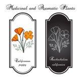 Blommor för Kalifornien vallmo Vektor Illustrationer