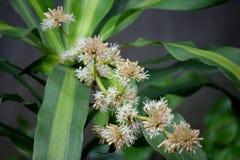Blommor för Khong ro-namn royaltyfria bilder