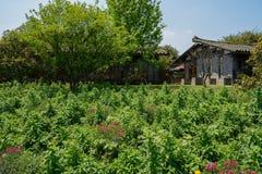 Blommor för kinesiska traditionella hus på den soliga vårmiddagen Arkivfoton