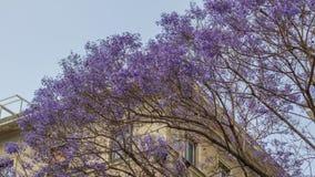 Blommor för lila för blomningträd Arkivbild
