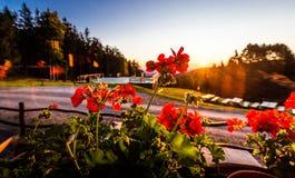Blommor för ljusa strålar för morgonsoluppgånggryning röda, Slovenien resande Arkivfoton