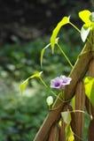 Blommor för morgonhärlighet. Royaltyfri Foto
