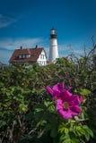Blommor för Portland huvudfyr i förgrund arkivfoto