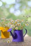 Blommor för prästkragetusensköna Royaltyfri Fotografi