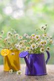 Blommor för prästkragetusensköna Arkivbild